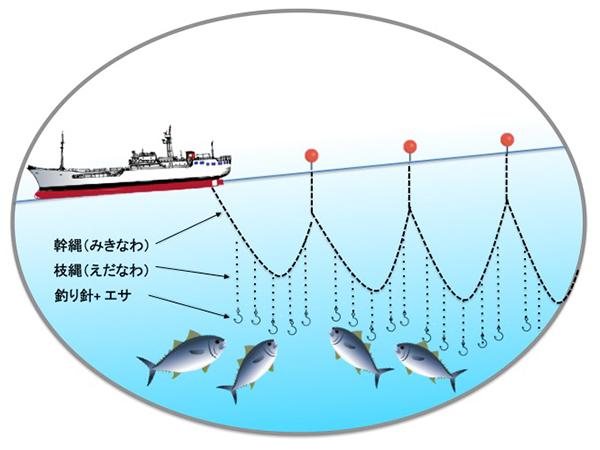 延縄(はえなわ)漁のイメージ 日本の歴史ある漁法 延縄(はえなわ)漁は、延縄漁具を利用してマグロ